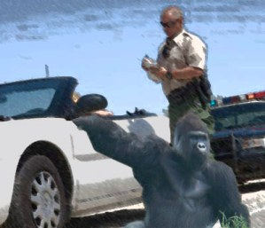 police-give-ticket-gorilla