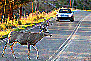 Deer-in-the-Road